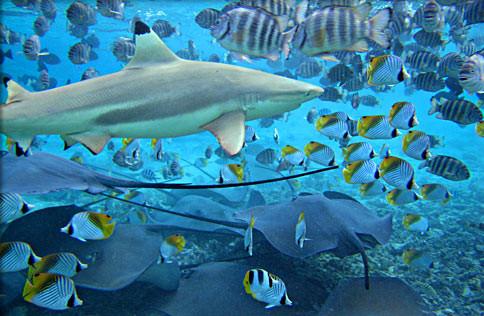 blue-bay-plonger-maurice